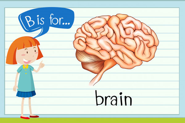 kids brain 1 - آموزش زبان کودکان