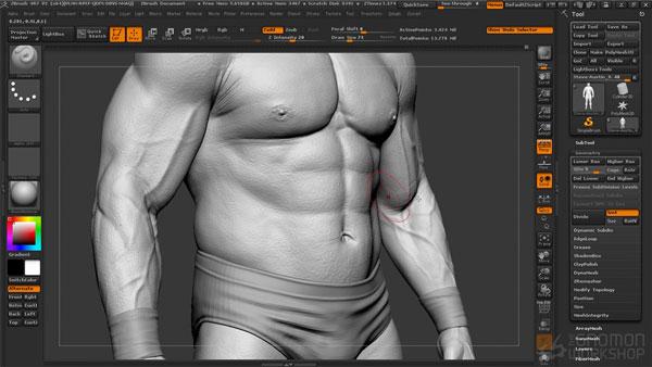 mojasamesazi anatomi zibrush14 - آموزش ساخت آناتومی در زیبراش