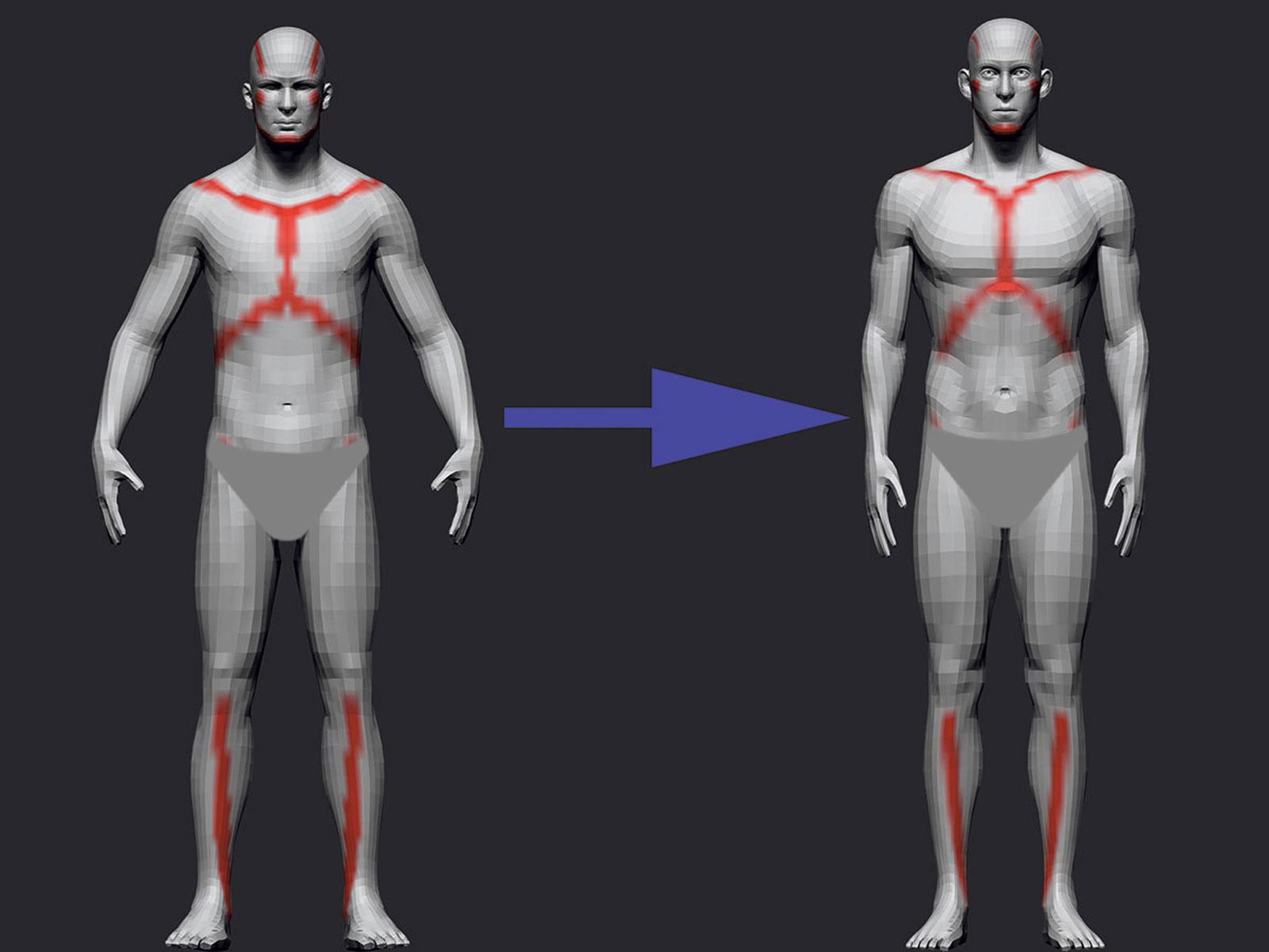 ساخت آناتومی در زیبراش