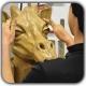 smoothing sculpture shakhes 80x80 - ساخت آناتومی واقعی با استفاده از ZBrush